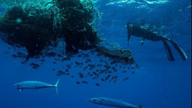 350 miglia a nuoto nel Pacifico per mostrare al mondo cosa c'è davvero dentro l'Isola di Plastica