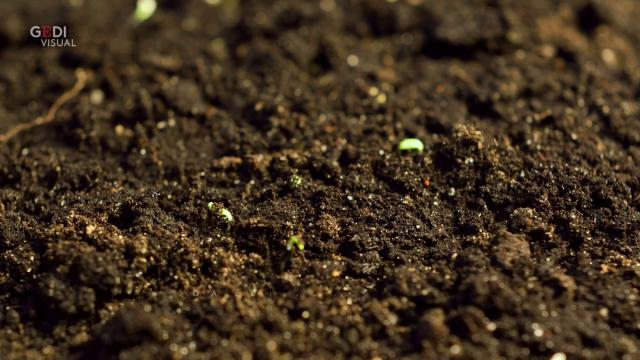A Seattle il primo impianto di compostaggio umano: dai defunti terreno per nuova vita