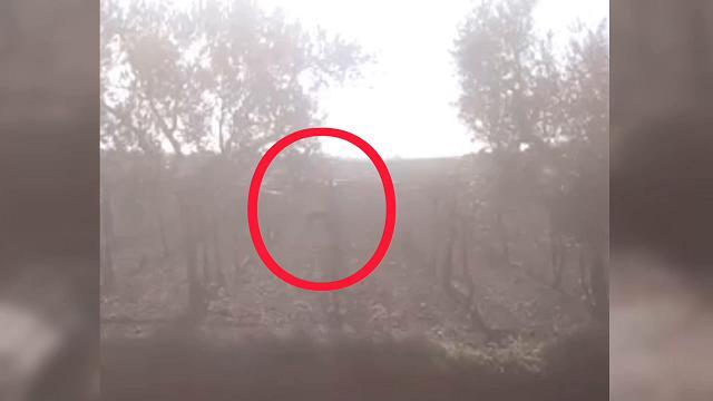 La pantera nera nelle campagne del Foggiano: i contadini filmano un animale tra gli alberi