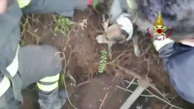 Intrappolati sotto terra per una notte intera: così i vigili del fuoco salvano i cani Cico e Briciola