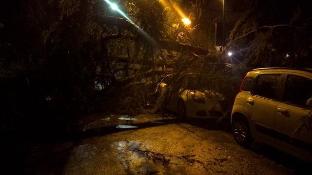 Maltempo, in Piemonte il vento forte fa cadere gli alberi: auto danneggiate a Tortona