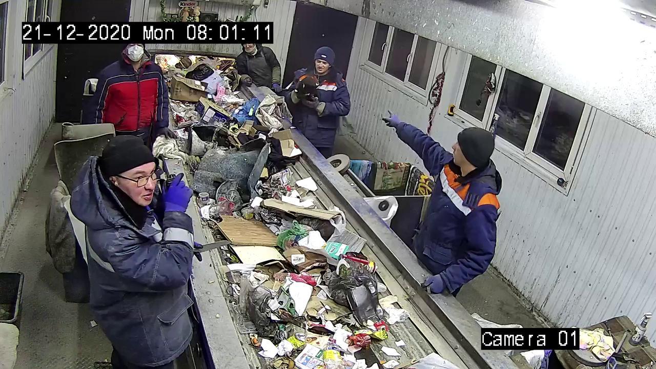 Russia, gli operai del centro rifiuti salvano il gatto gettato nella spazzatura