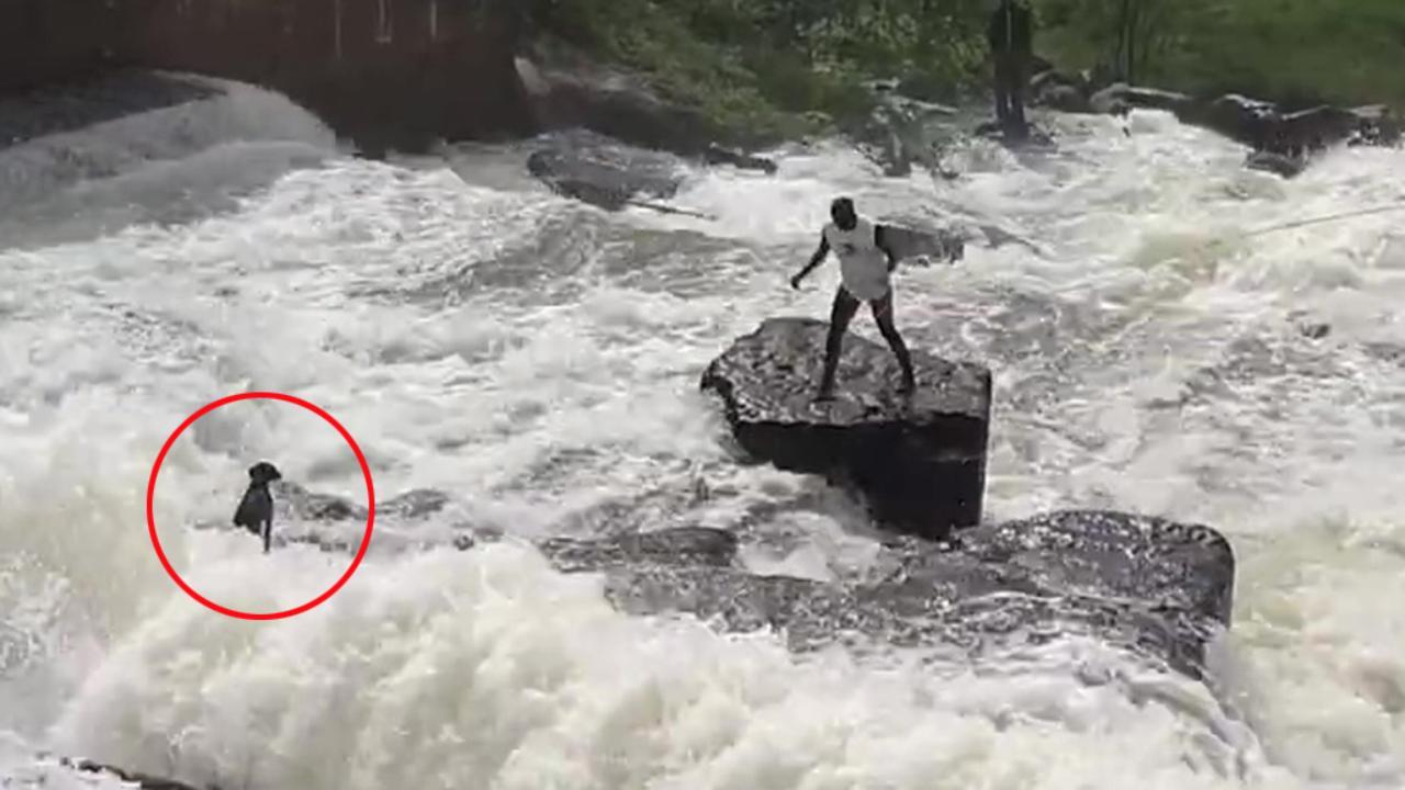 L'eroico gesto di un giardiniere che salva un cane caduto in una diga