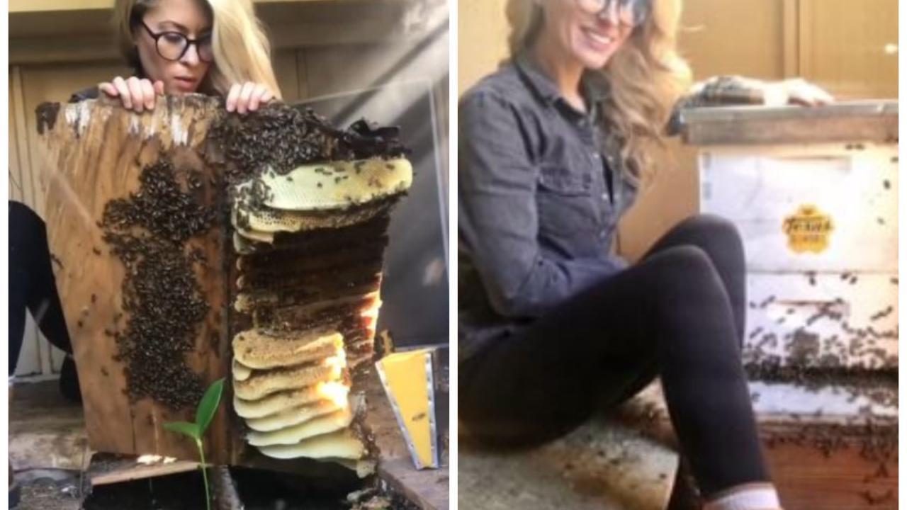 Texas, l'apicultrice salva migliaia di api con un metodo tutto suo e fa impazzire la rete