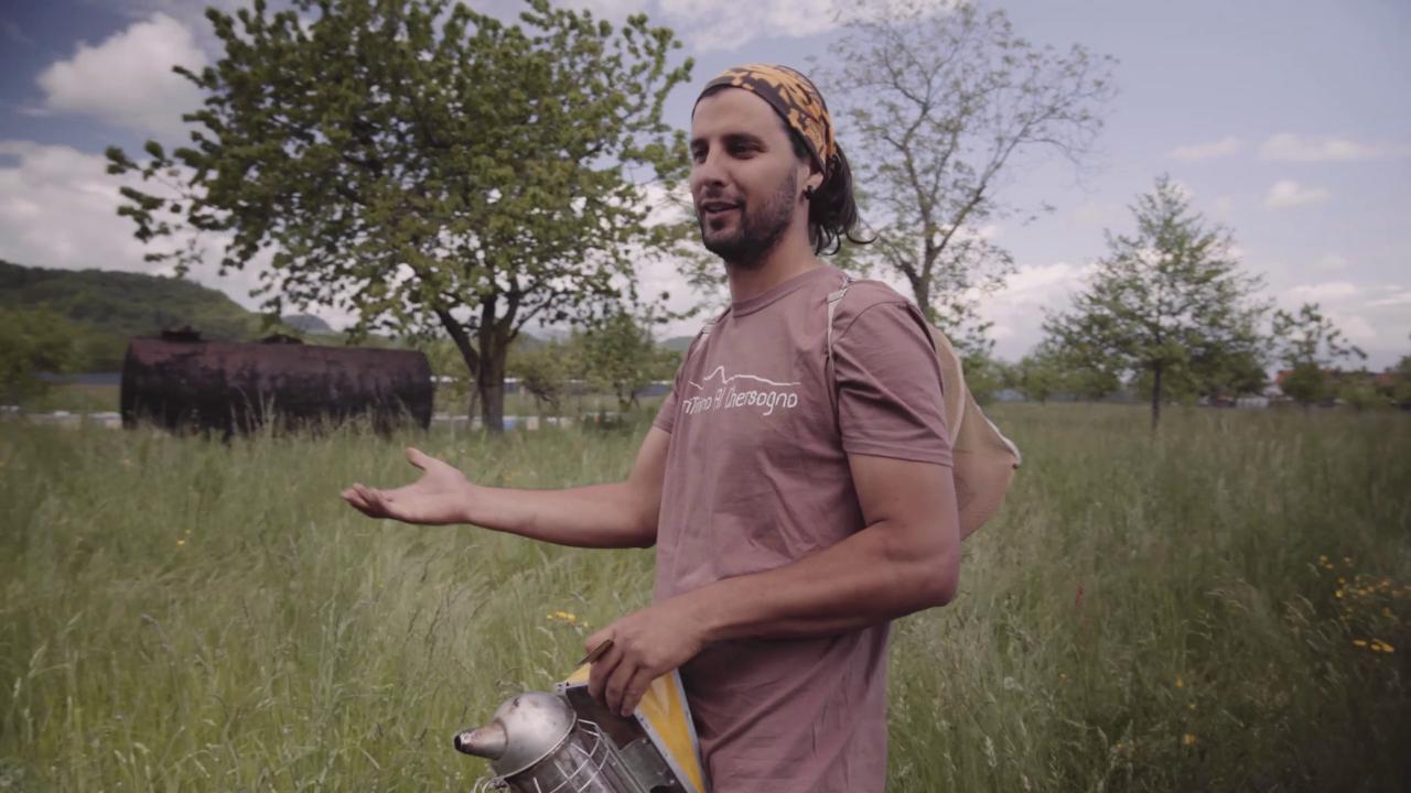 """Strage di api, il dolore di Mattia viene ripagato: """"Donazioni record, ma vorrei fossero ancora vive"""""""