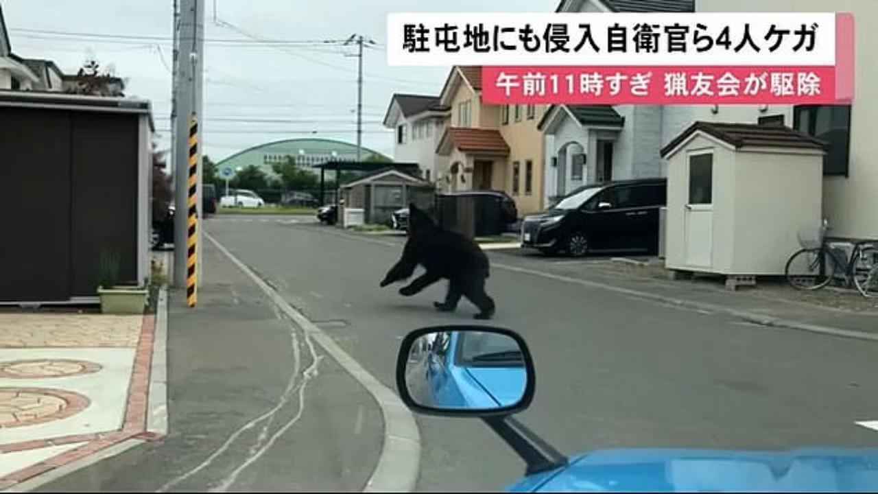 Choc in Giappone, orso entra in città e ferisce quattro persone: i militari lo uccidono