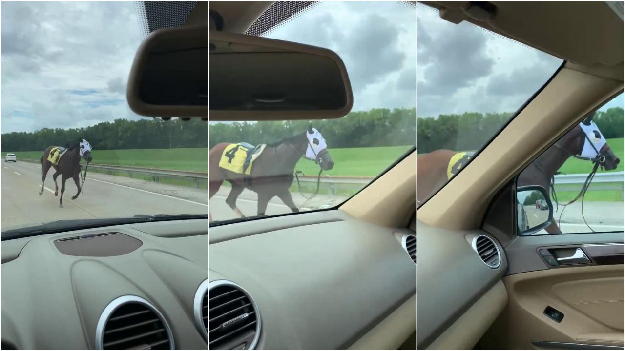 Usa, il cavallo scappa dalla sua prima gara in carriera e fugge sull'autostrada attraversando due Stati
