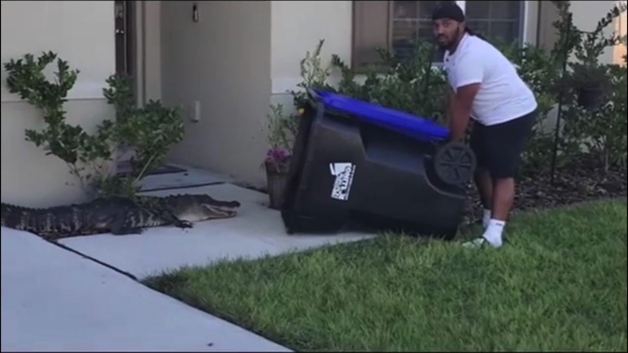 Florida, alligatore entra nel giardino di casa: catturato col bidone dell'immondizia